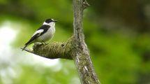 « Nature Alerte » : Mobilisation pour la biodiversité Européenne